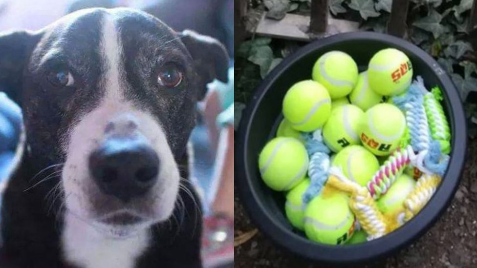 Tennis ball memorial tribute to dog goes viral