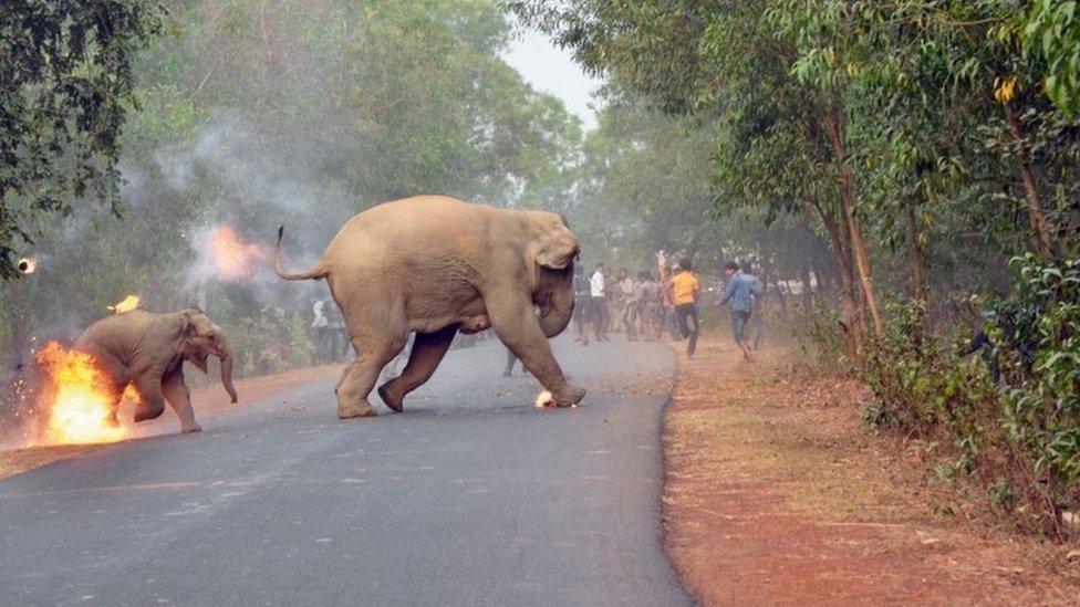 Dos elefantes en llamas escapan de unos mafiosos en India. (Foto: Biplab Hazra / Concurso Fotográfico de Vida Silvestre de Sanctuary)