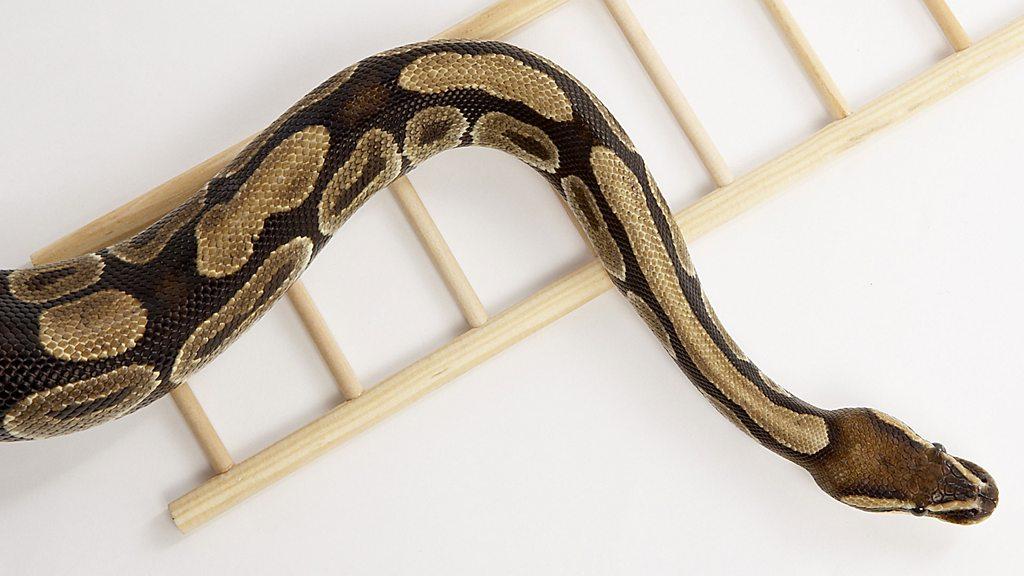 Click News: A ladder-climbing robotic snake