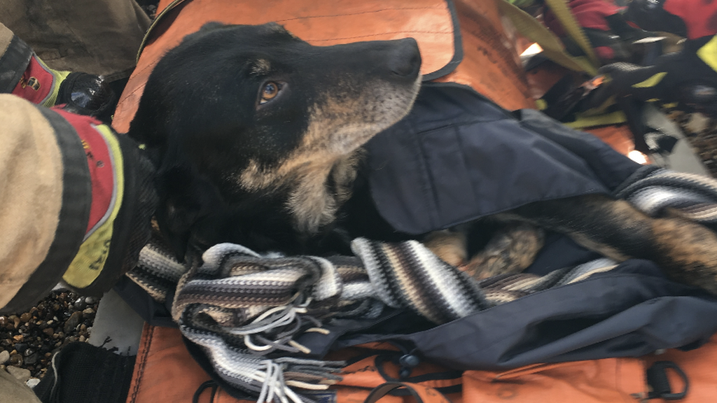 Dexter the dog survives 130ft cliff fall