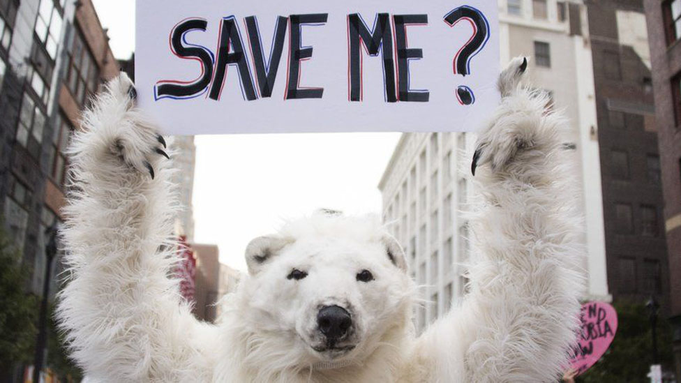Polar bear protest