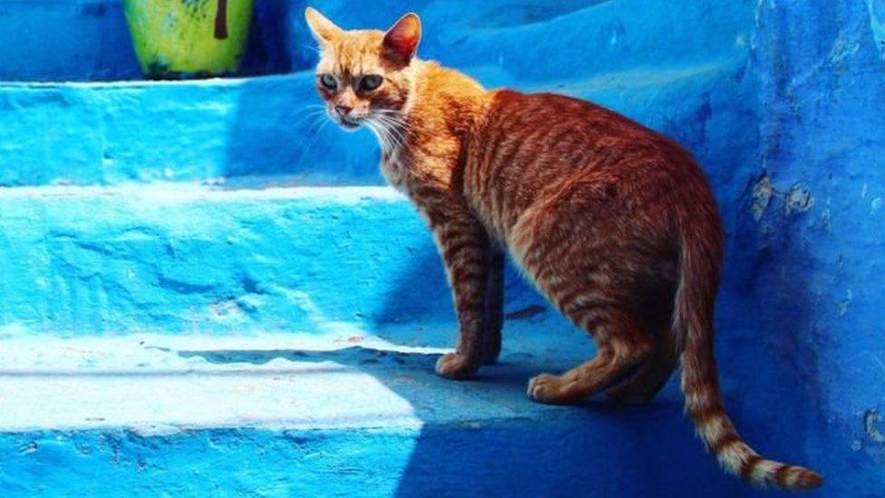 قط في المغرب (أرشيف)