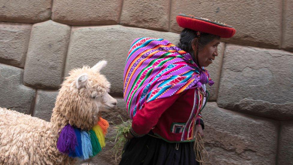 Mujer indígena peruana tirando de su alpaca.