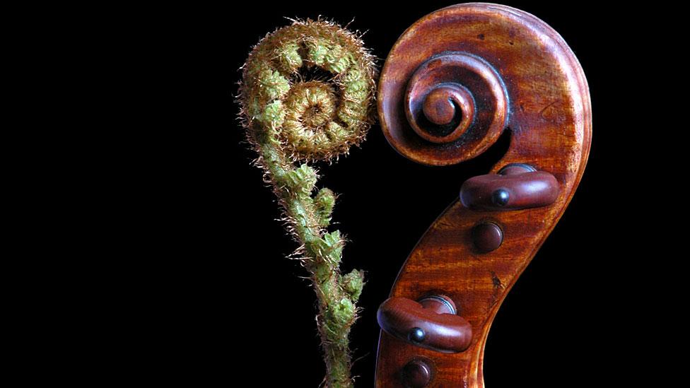 Planta y violín