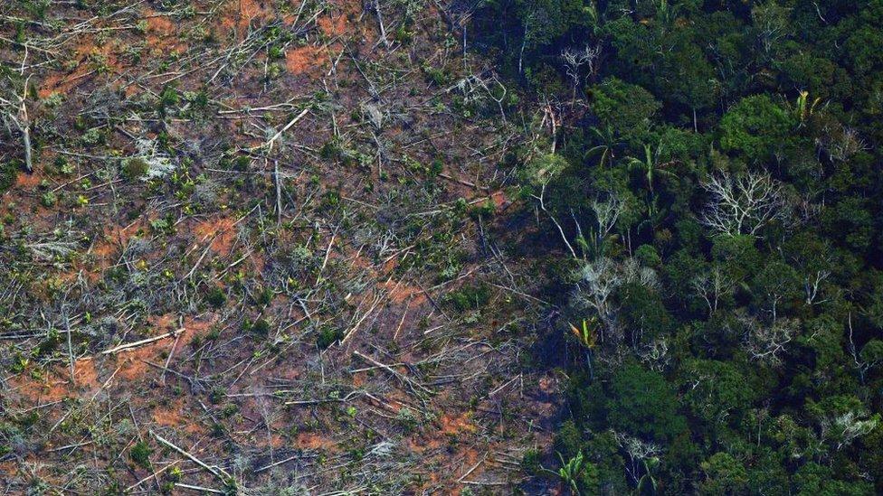 Tala de árboles en Amazonas