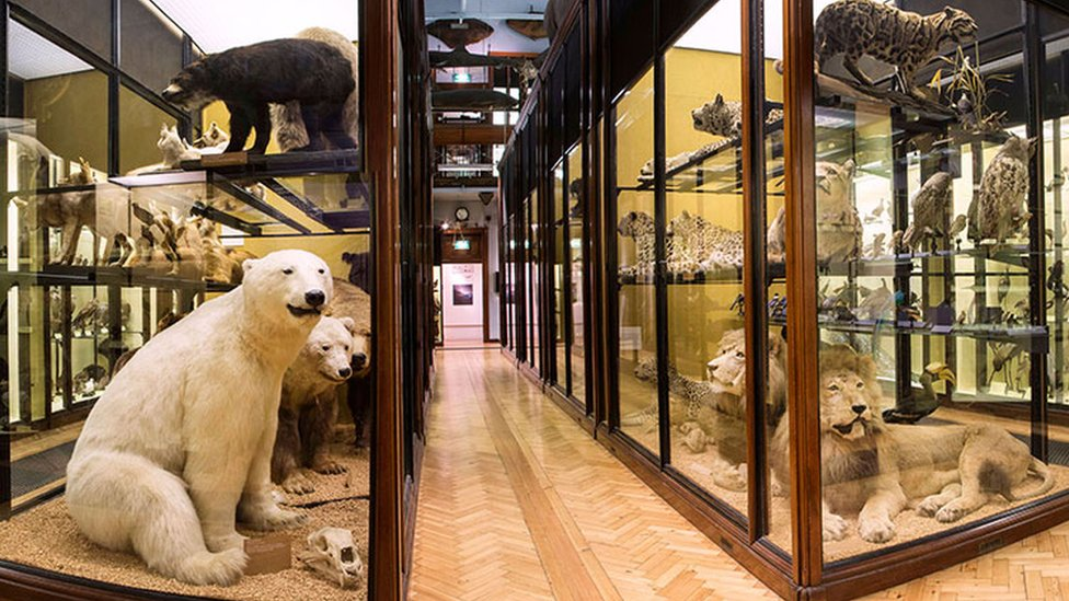 Natural History Museum, Tring