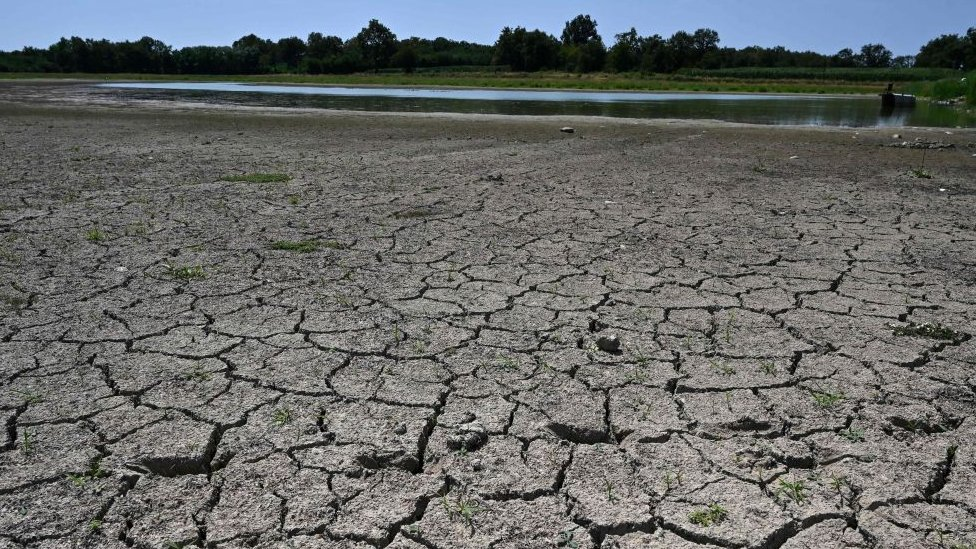 Dried out pond in Villars-les-Dombes, central eastern France, July 2019