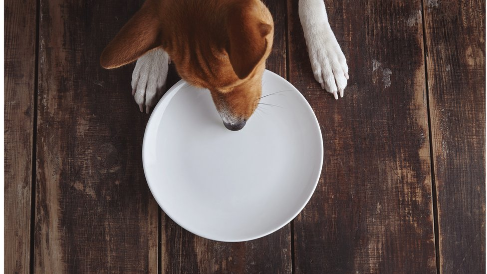 Dogs like to scrounge from humans