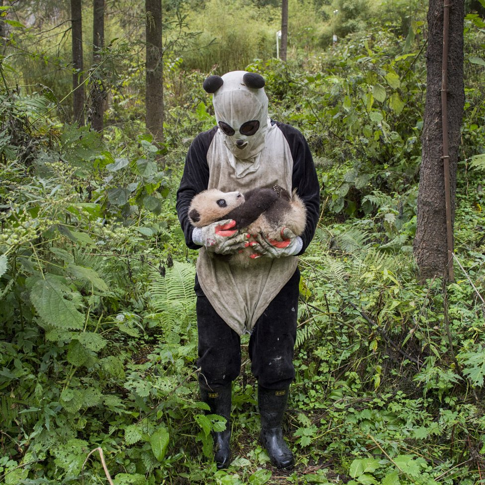 A scientist with a panda