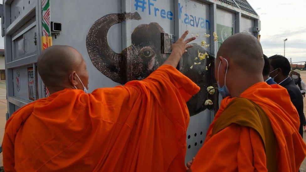 Buddhist monks bless Kaavan