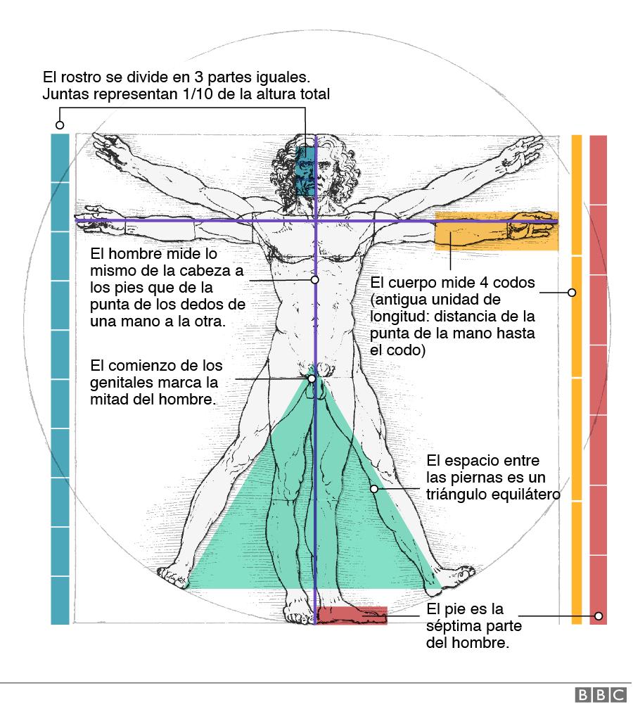 Gráfico mostrando algunas de las proporciones que detalla Da Vinci