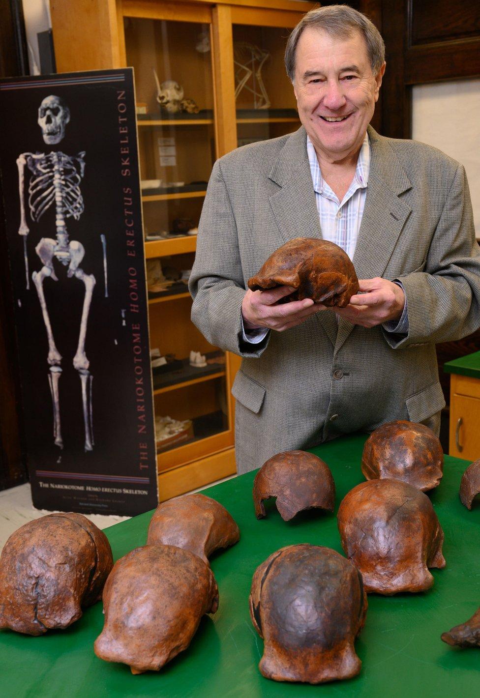 El profesor Russell Ciochon con réplicas de cráneos del Homo erectus encontrados en Ngandong.