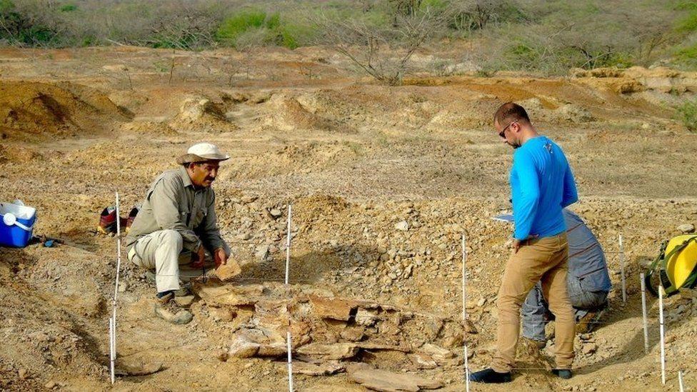باحثا حفريات