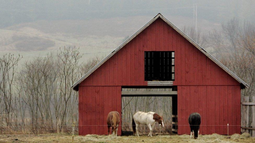 tres caballos de pie fuera de un granero rojo de puertas abiertas.