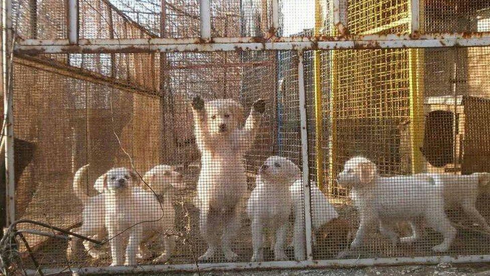 Psi u kavezu