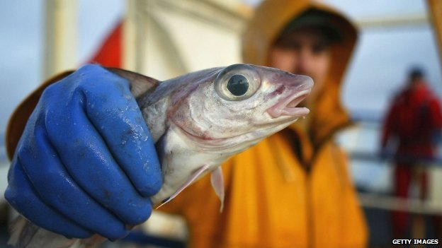 Fisherman holding a fish (Getty Images)