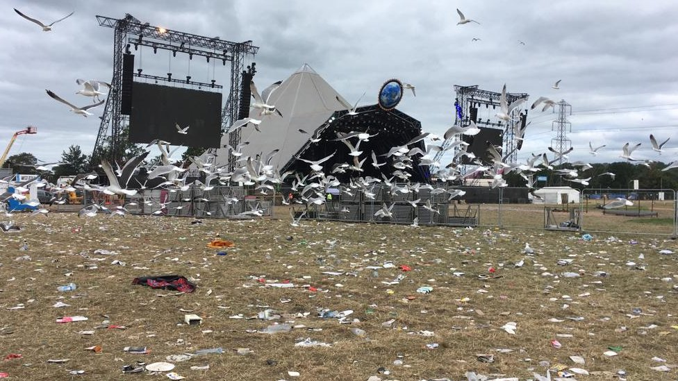 Gulls scavenge on the field next to the Pyramid stage