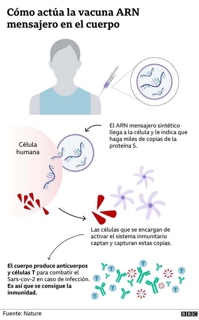 Gráfico de cómo actúa la vacuna en el cuerpo