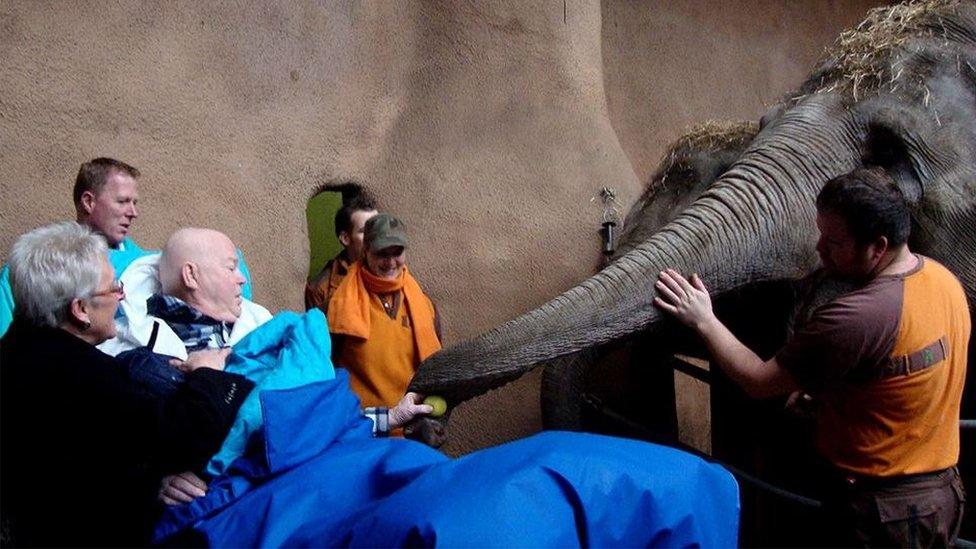 Laki-laki memberi makan gajah dengan apel
