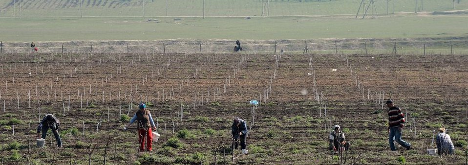 Moldovan workers work on a field next to Comrat, the main city of the Gagauzia region on April 8, 2014