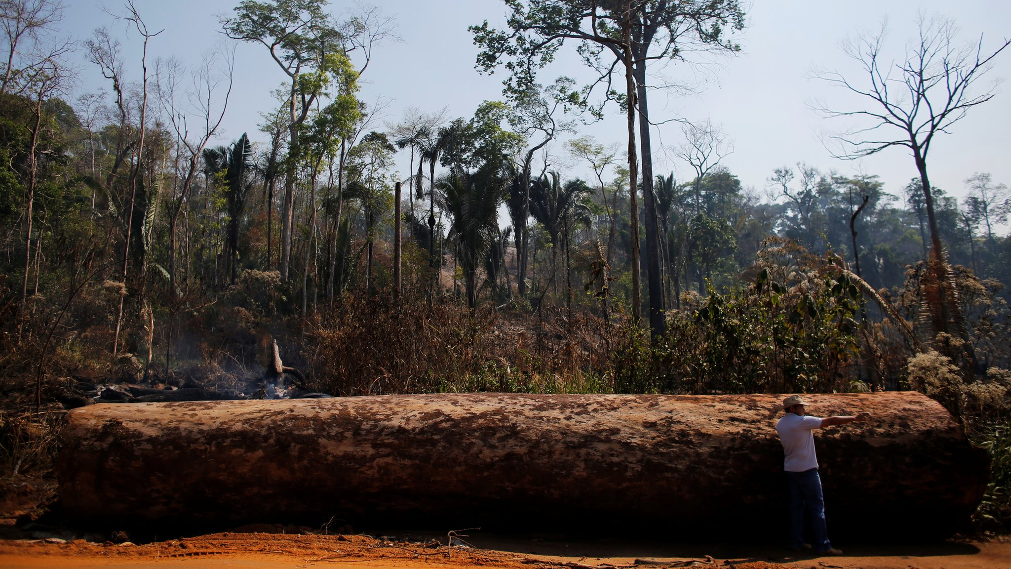 A man points next to a tree extracted illegally from the Amazon rainforest in 2015
