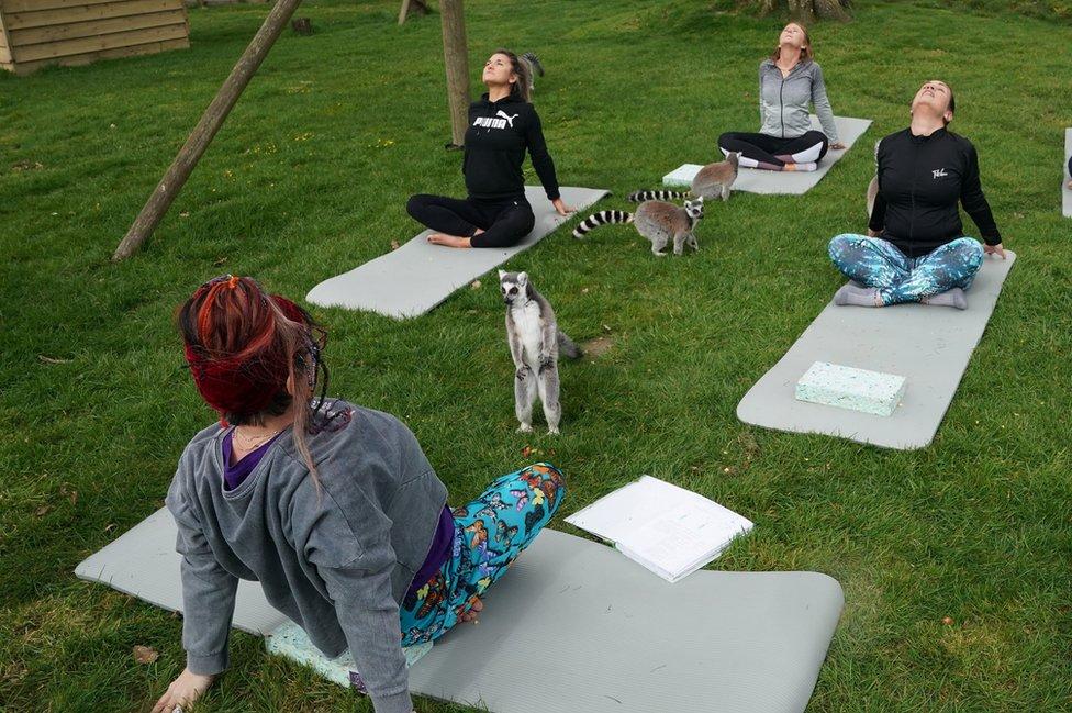 Lemuri rade s jogu s gostima hotela