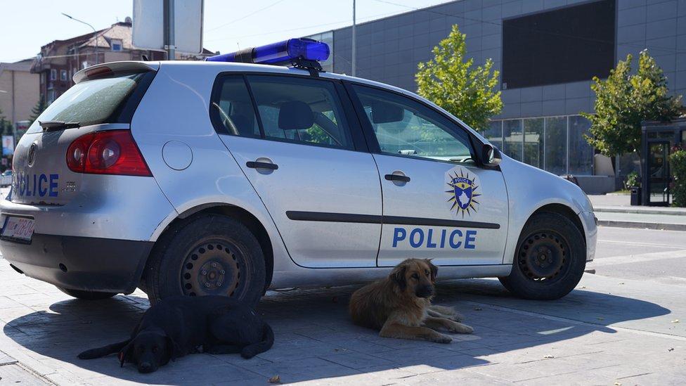 Napušteni psi su, takođe, jedan od nerešenih problema na ulicama grada. Tokom godina kuce su se navikle na život u gradu, a građani ih prihvatili. Trovanje pasa je, kažu građani, ipak često