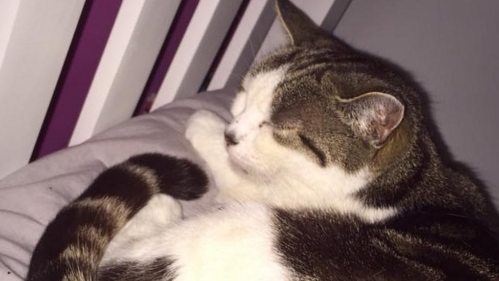 Plymouth cat dies after pellet found in lungs