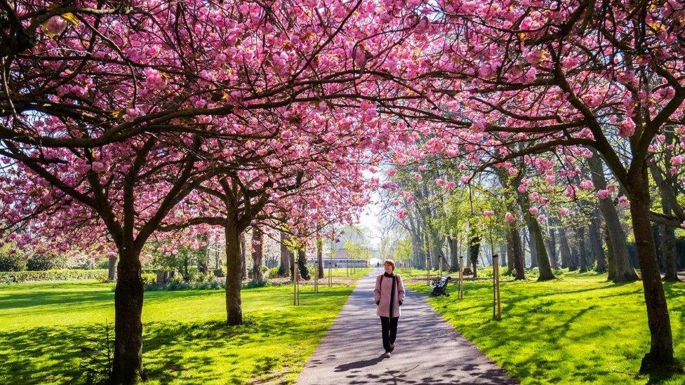 Čim izađemo iz kuće - čak i u šetnju parkom - naš mozak počinje da obraća pažnju