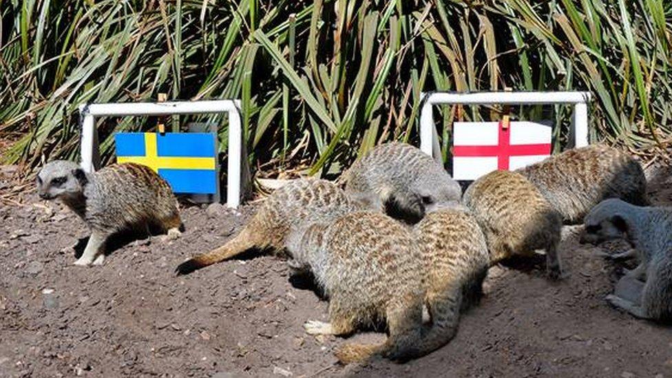 'Psychic' animals predict World Cup