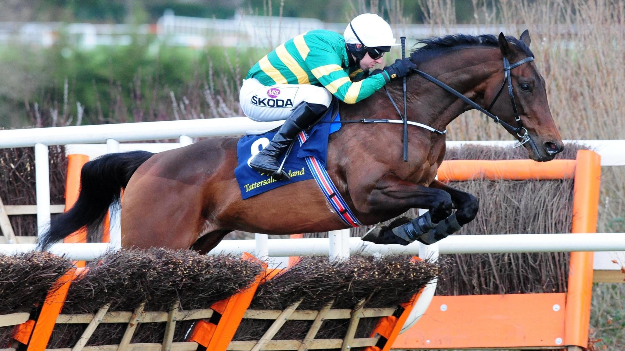 Cheltenham Festival 2019: Sir Erec and Invitation Only suffer fatal injuries