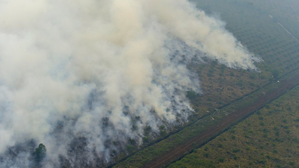 Forest fire in Indonesia's Riau province (26 Sept 2015)