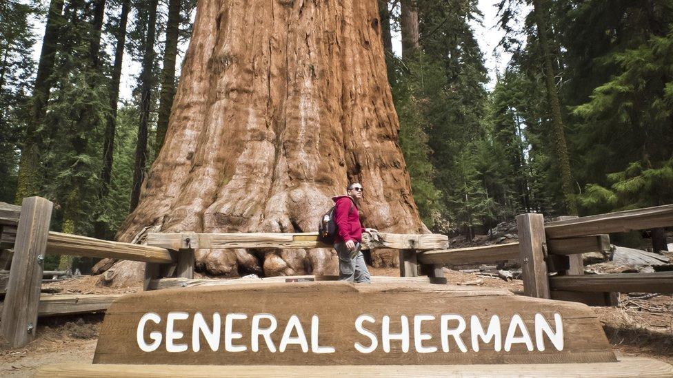 Пожарные в Калифорнии пытаются спасти самое большое дерево в мире