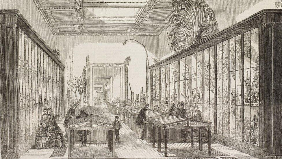 La sala de botánica del Museo Británico en 1858.