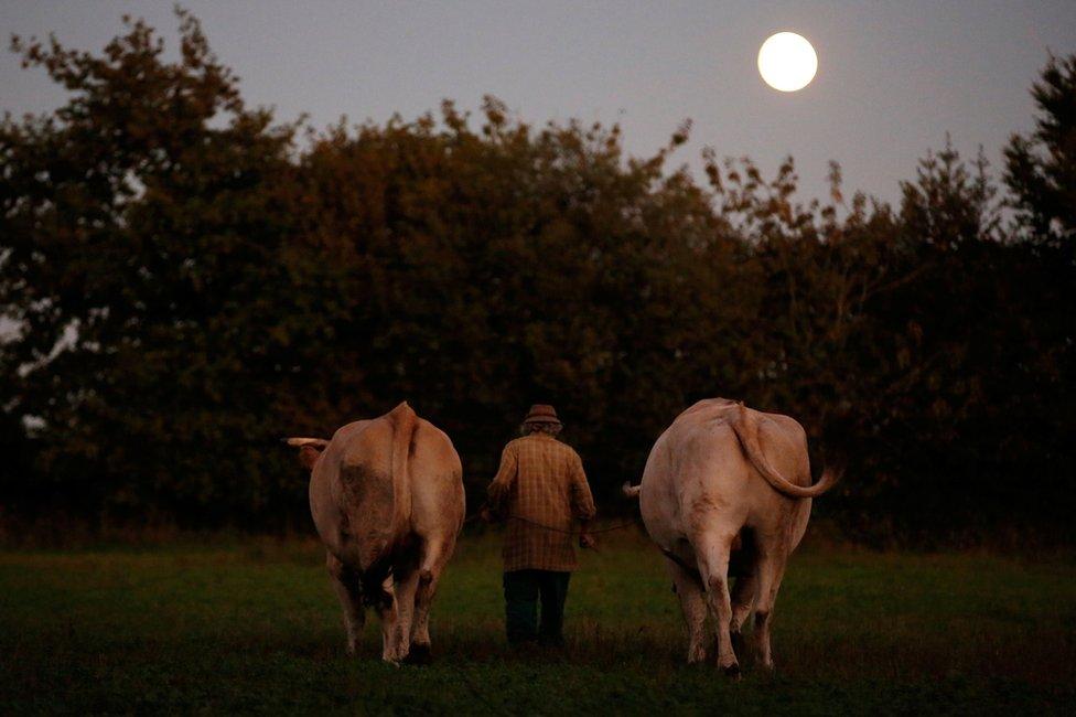 Žan sa dva bika