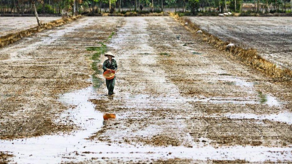 沙子,環境,地球,氣候,越南