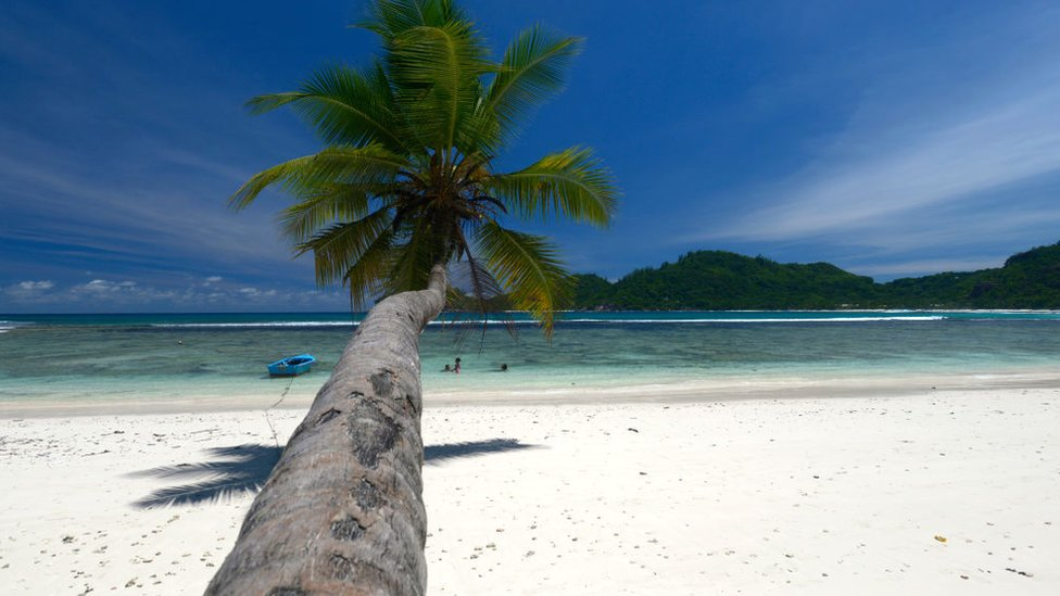 A palm tree on a beach in Seychelles