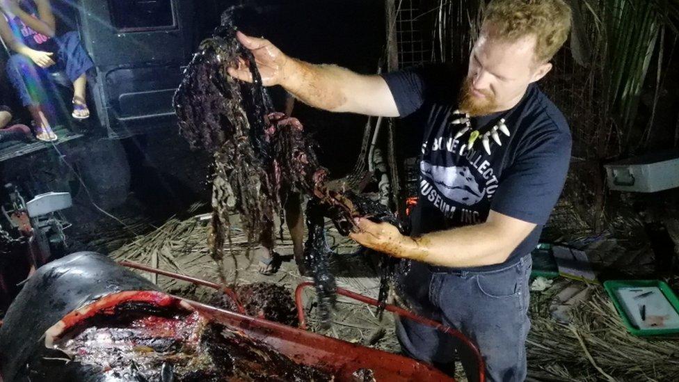 El biólogo Darrell Blatchley extrae del cuerpo de la ballena basura plástica.