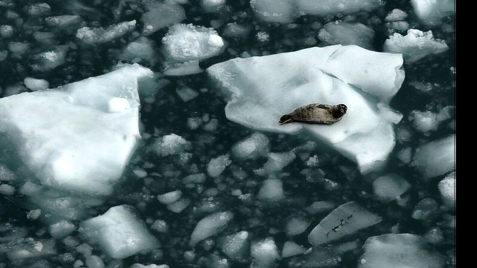 Arktički led
