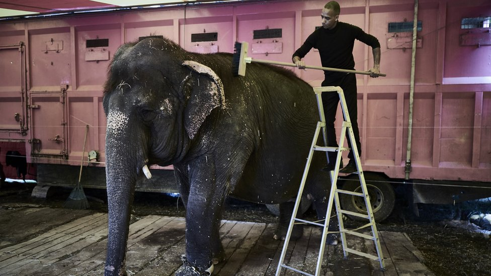 A man cleans an elephant at the Medrano Circus, as the travelling circus set up his circus tent in Lyon