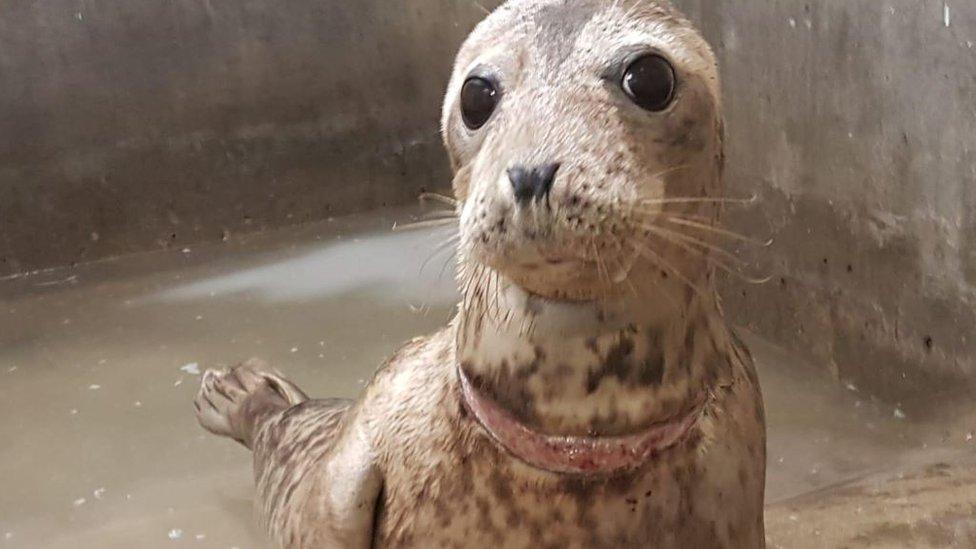 Flowerpot the seal