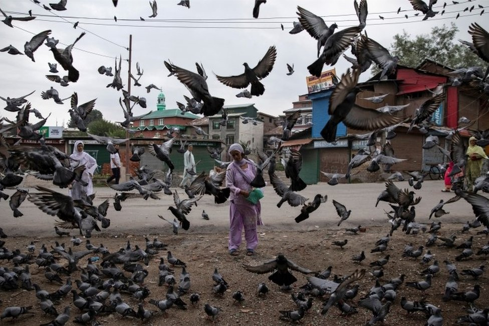 A Kashmiri woman feeds pigeons at a street during restrictions after the scrapping of the special constitutional status for Kashmir by the government, in Srinagar, August 11, 2019