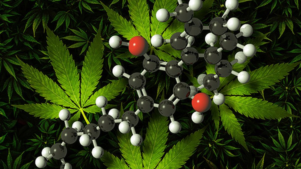 Cannabis and compounds