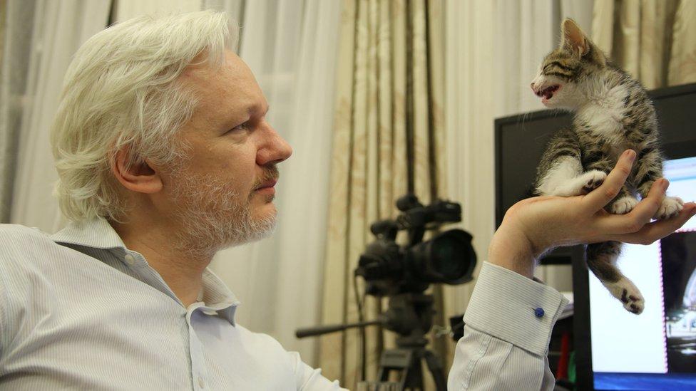 Wikileaks founder Julian Assange holds a pet kitten