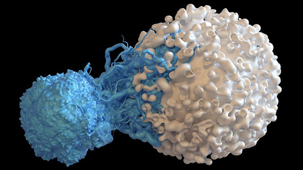 Una ilustración de una célula T atacando a una cancerosa