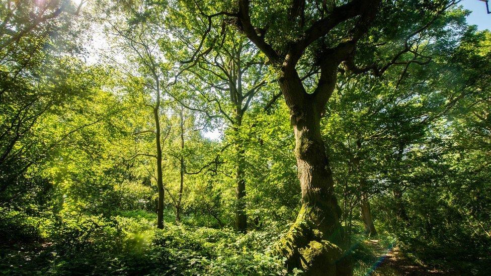 Glyn Davis Wood in Warwickshire