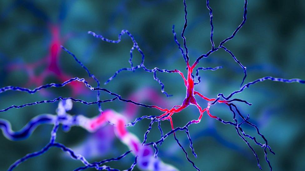 خلايا دماغية