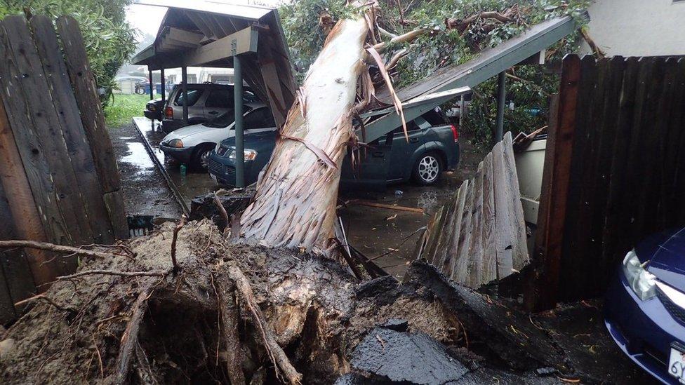 A large eucalyptus tree toppled on to a carport in Goleta, California, on 17 February 2017