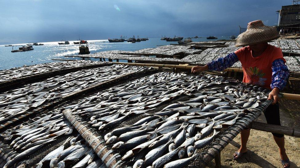Žena suši ribu u Šenženu