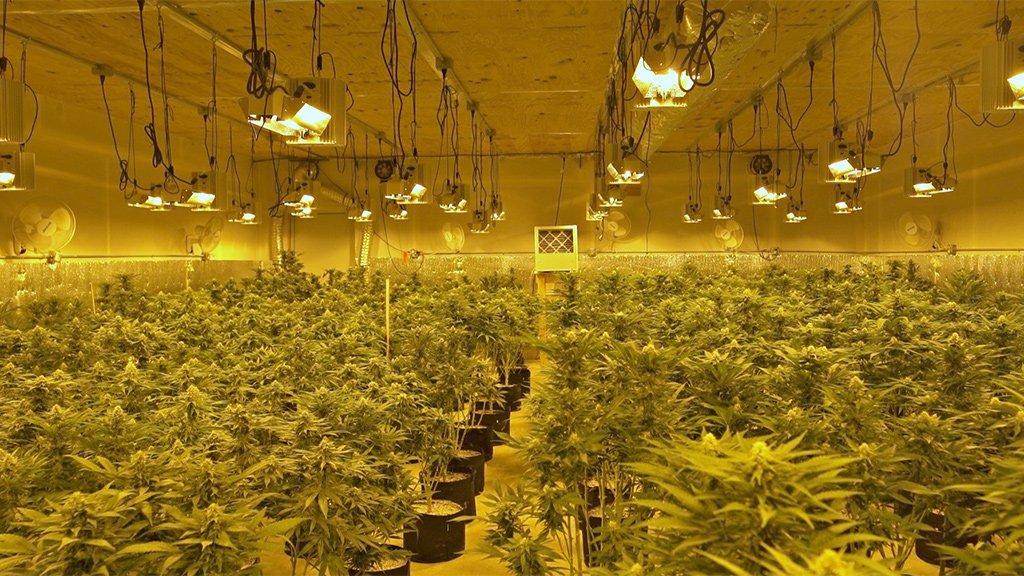 Aaron's marijuana farm in Oklahoma